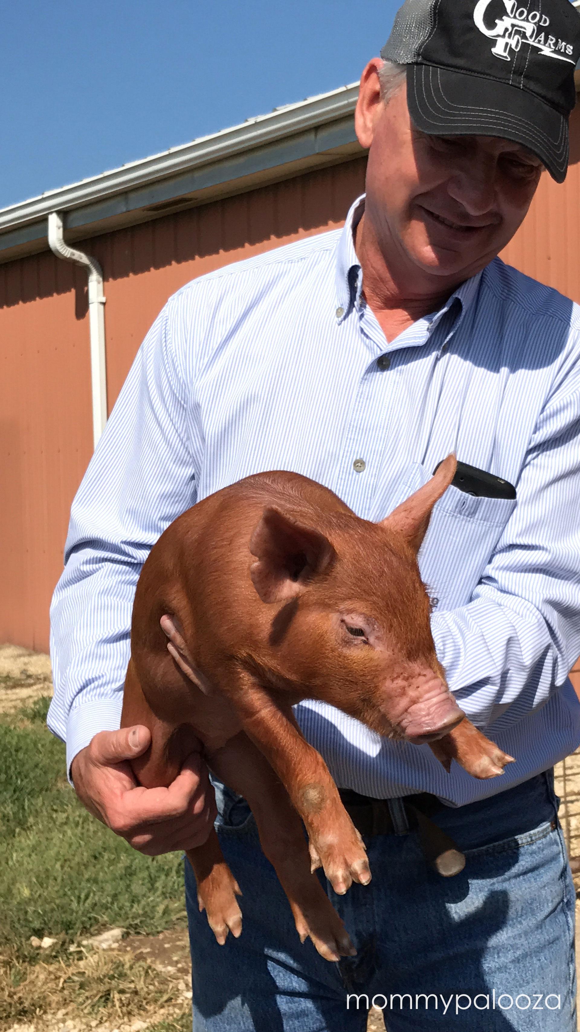 Good Pig Farm - Craig Good holding a baby pig